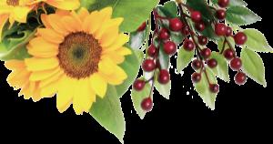 コンセプトエリア背景の左花
