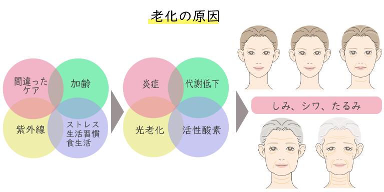 老化の原因