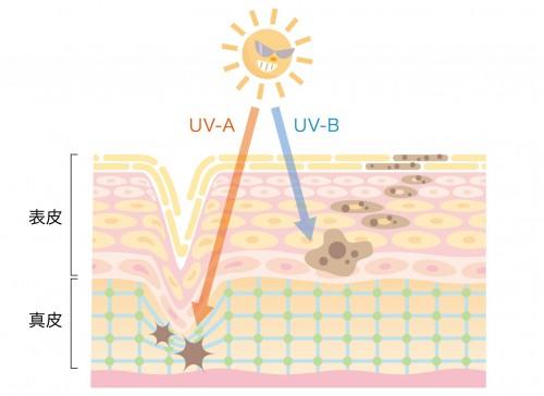 お肌が老化する原因の65%!紫外線(光老化)について知ろう