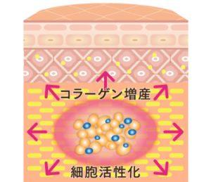 PRP皮膚再生療法とは?