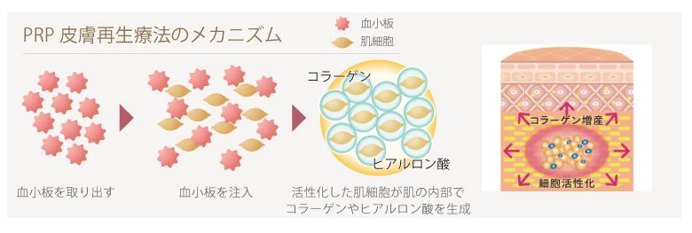 PRP皮膚再生療法のメカニズム
