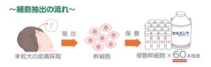 幹細胞治療工程