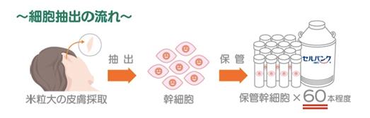 幹細胞の摘出イメージ