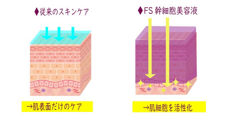 幹細胞コスメとの違い