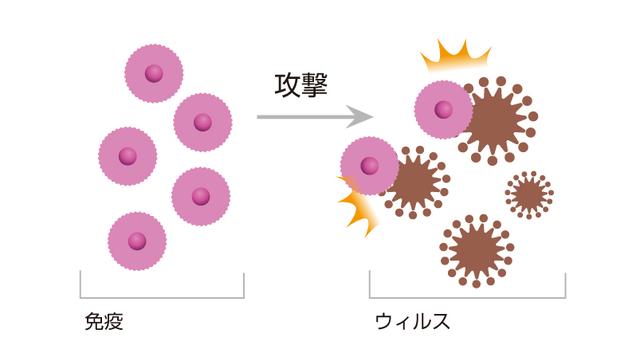 NK細胞療法ウイルス攻撃