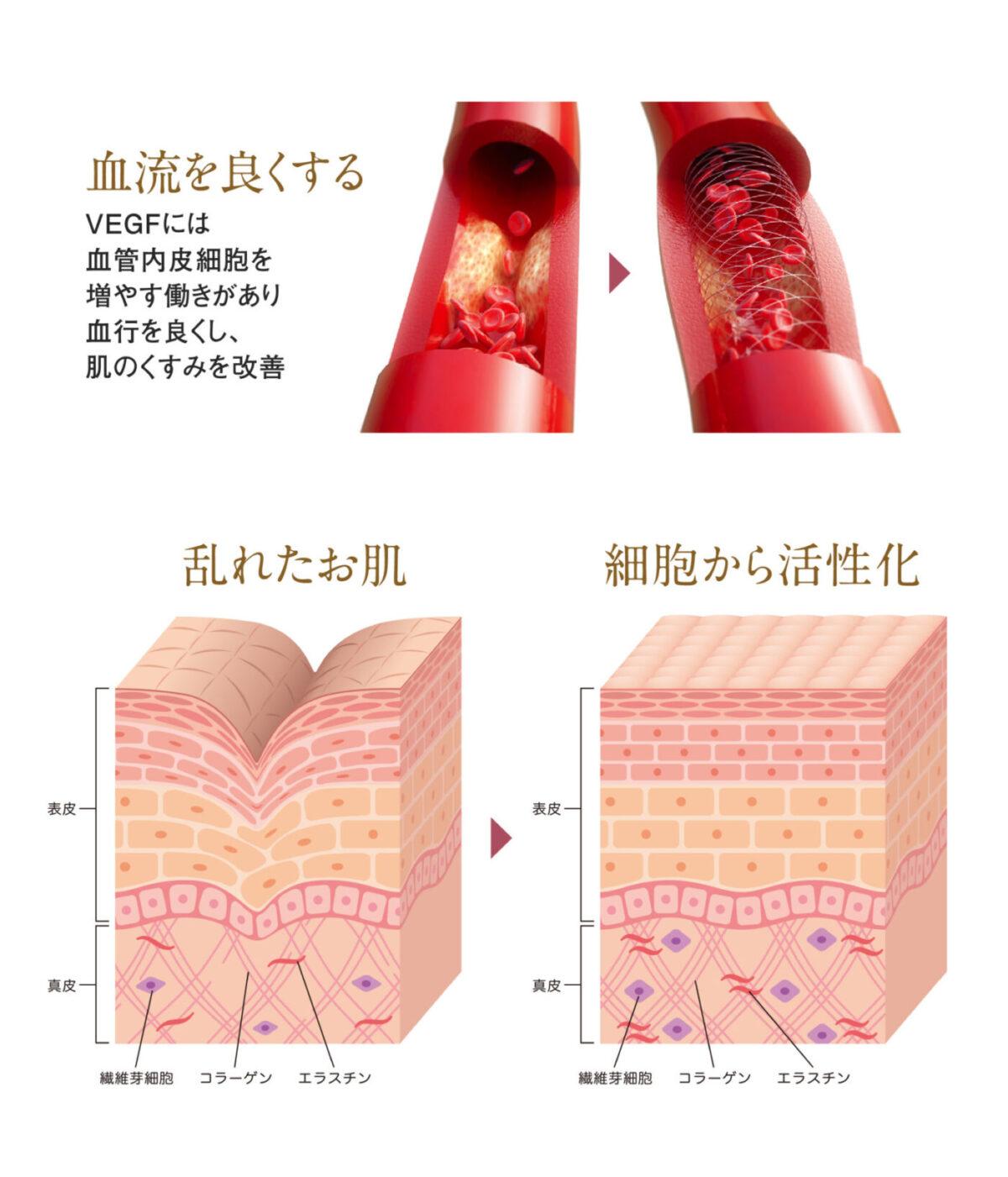 血管と肌図